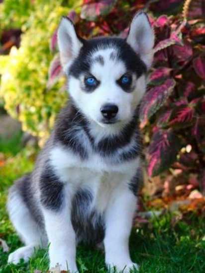 Adoptar Perros Atacama Cachorros En Adopcion Atacama 2017